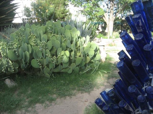 cactusbottles